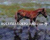 Click here for Assateague ponies and more.....