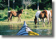 Kayak Tours by Assateague Explorer