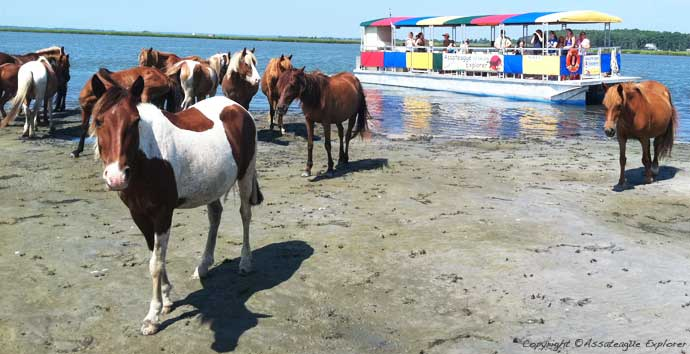 2011 Assateague Cruise